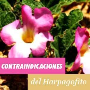 Contraindicaciones del Harpagofito