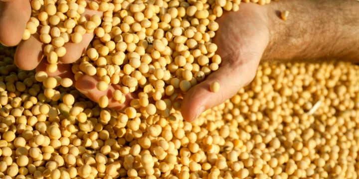 Fuentes de Vitamina K en la soja