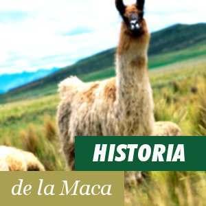 Historia de la Maca